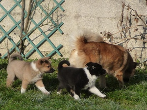 2009-01-12-chiots-087